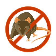 extermination souris rats cassis