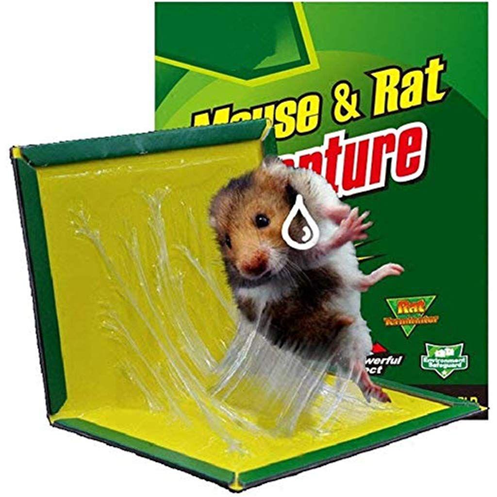 avantage Piège à rat professionnel