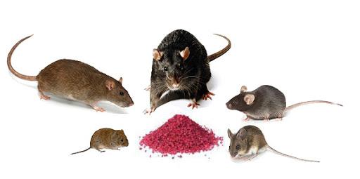 raticides formes cereales